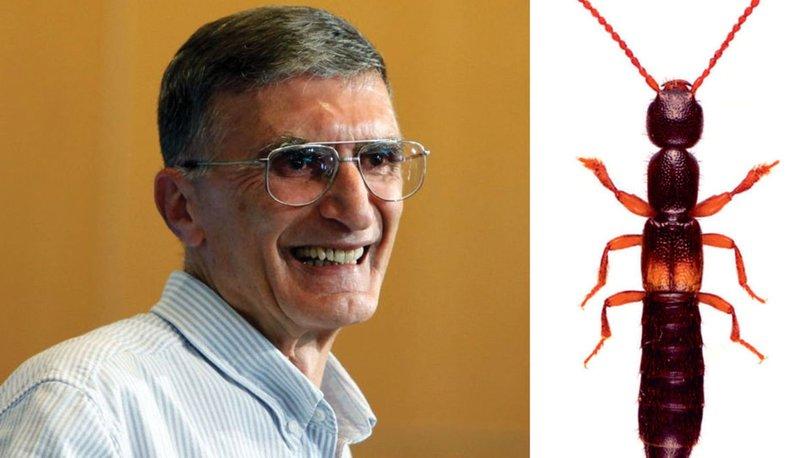 Anadolu'da yeni keşfedilen yararlı böcek türü, Aziz Sancar'ın ismiyle anılacak