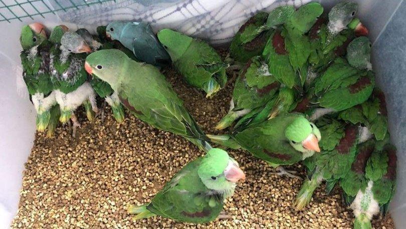 İSTİLACI KUŞLARA OPERASYON! Son dakika: Yerli kuş türlerini yok eden papağanlar ele geçirildi!