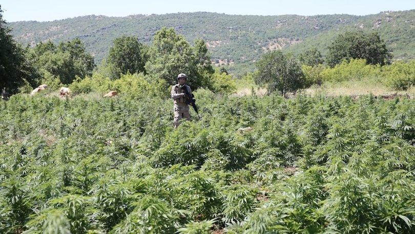 168 TON! Son Dakika: Diyarbakır'da büyük uyuşturucu operasyonu! - Haberler
