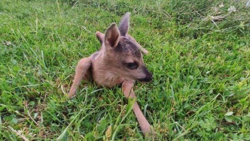 Düzce'de orman işçilerinin bulduğu yavru karaca korumaya alındı