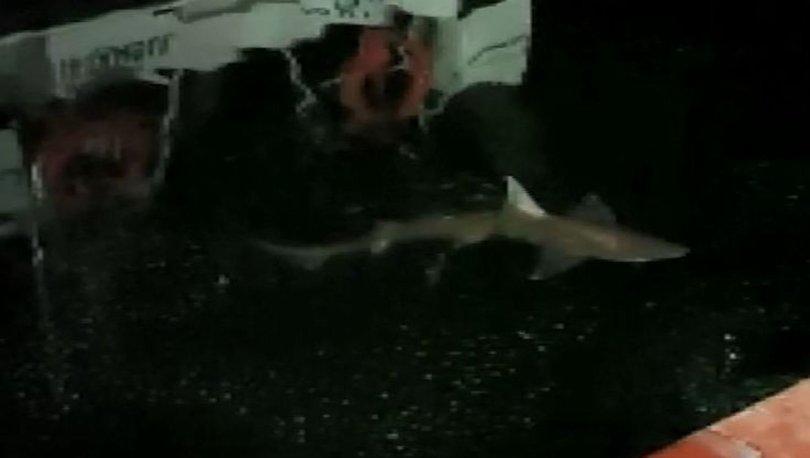 Haliç'te köpek balığı görüntülendi