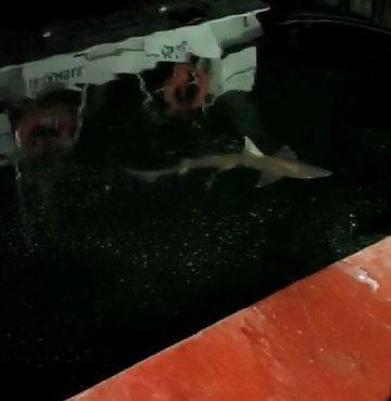 Haliç'te bir balıkçının oltasına köpek balığı takıldı. Gördüğü köpek balığı karşısında şaşkına dönen balıkçı, o anları cep telefonuyla görüntüledi.