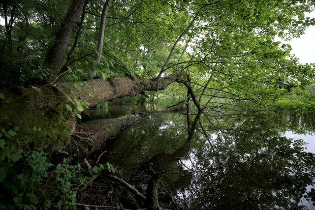 İstanbul'un yanı başındaki saklı cennet: İğneada Longoz Ormanları