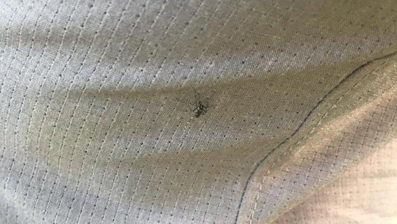 HER YIL 400 MİLYON KİŞİ! Öldürücü hastalığı sivrisinekle yendiler!