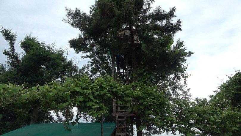 Yıllar önce ağaçtan düştü! İlk fırsatta bunu yaptı - Haberler
