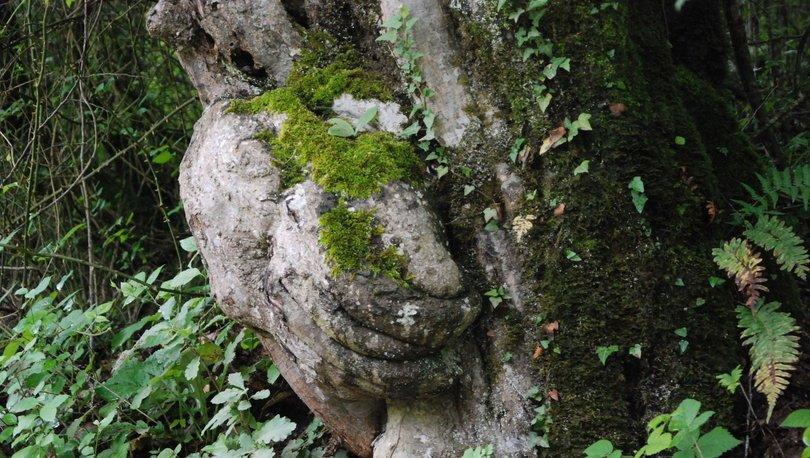El figürlü ağaç koruma altında