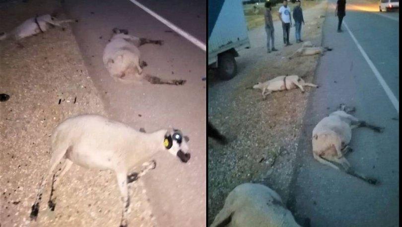 CANİ... Son dakika: Koyunları katletti, arkasına bile bakmadı