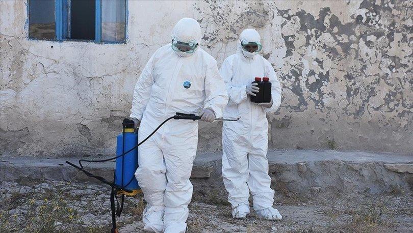 Kaldırımdaki otlarla mücadelede kullanılan kimyasalların 'kanser' riski taşıdığı iddiası