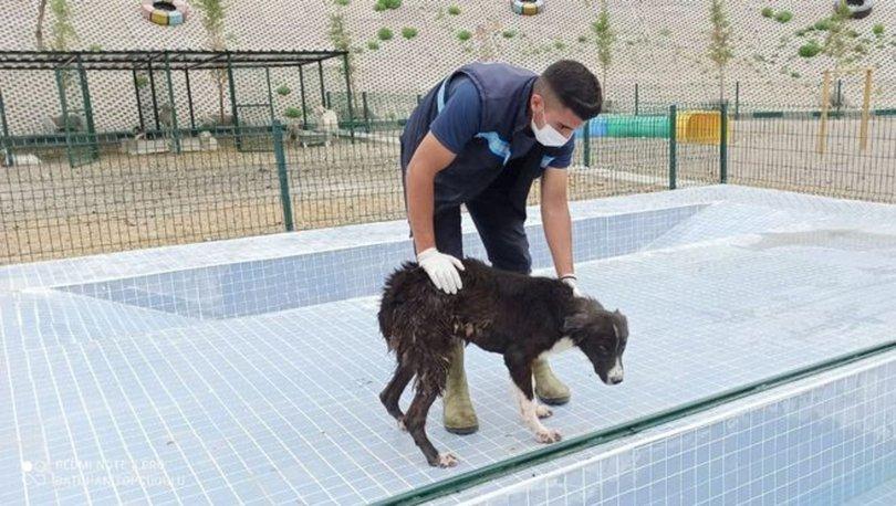 Sincan'da sokak köpekleri için 'Eğitim Parkuru'