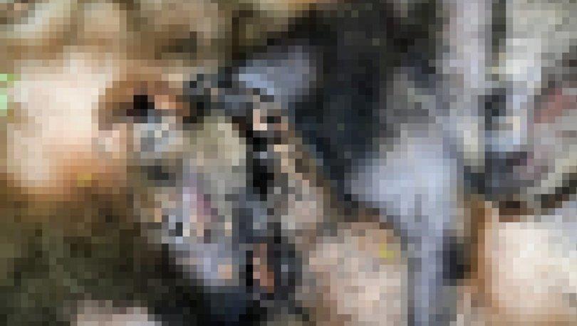 SON DAKİKA! İstanbul'da vahşet! Köpekleri kesip yaktılar