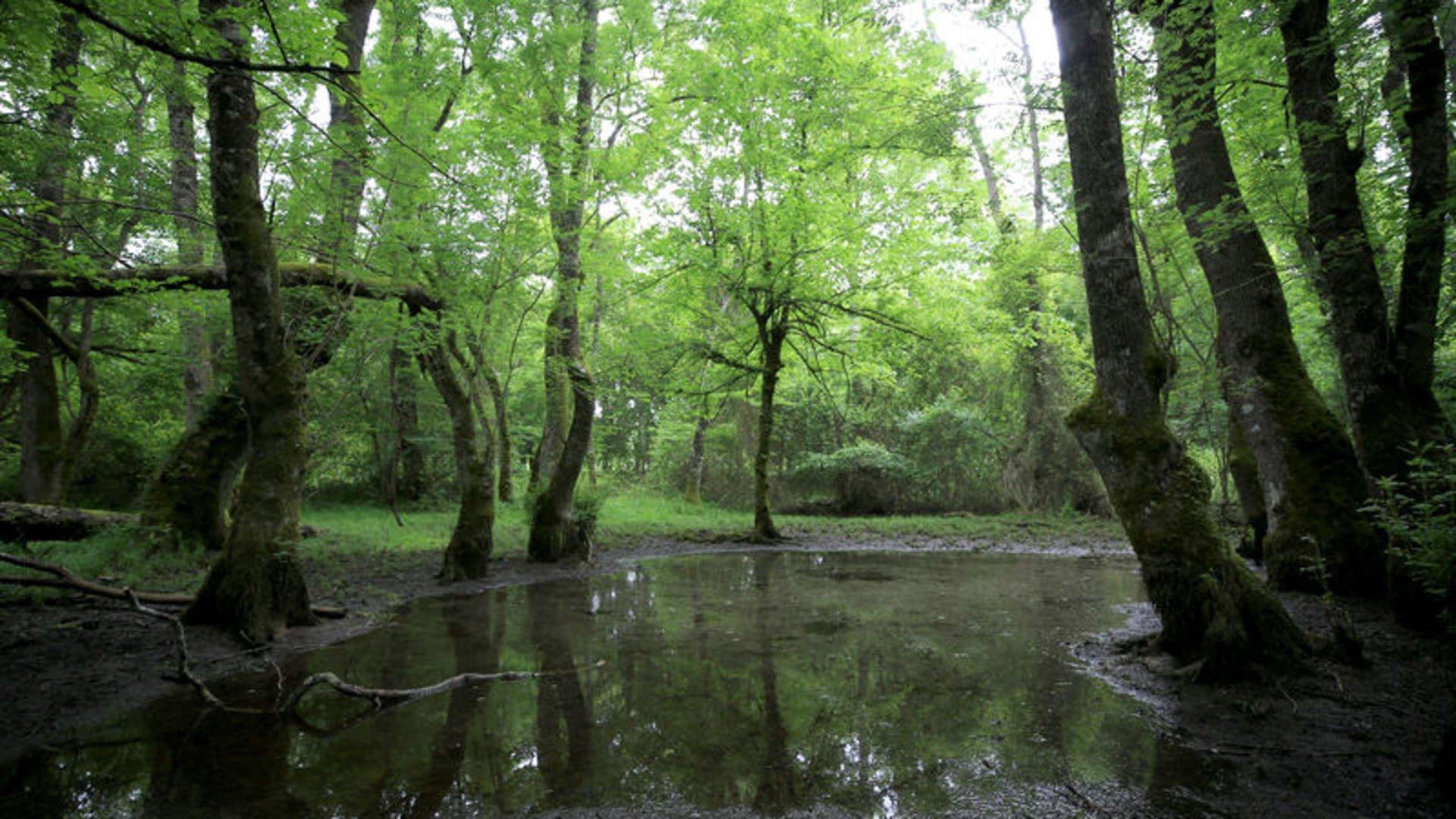 Doğal çevreyi korumak için neler yapılmalı?