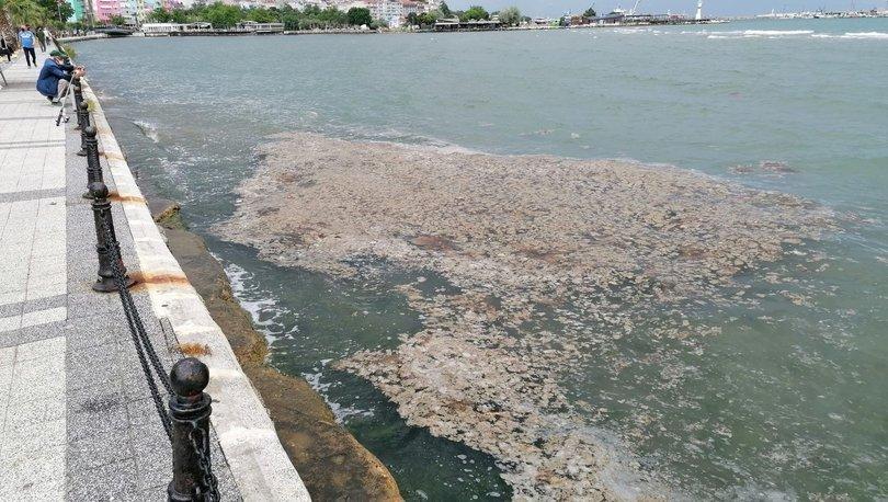 ÖNCE MÜSİLAJ, ŞİMDİ YENGEÇ! Son Dakika: Marmara Denizi'nde ölü yengeç tedirginliği! - Haberler