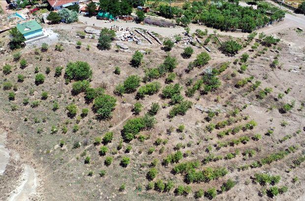 35 yılda 40 bin fidanı toprakla buluşturdu