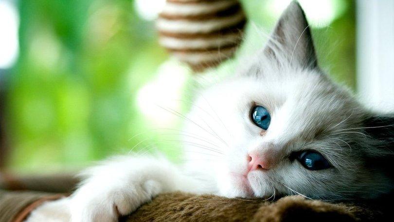 SON DAKİKA: Covid-19: Kediler ve köpekler de hastalığa yakalanabiliyor