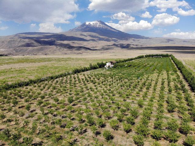 Ağrı Dağı eteklerindeki çorak araziyi vahaya dönüştürdü