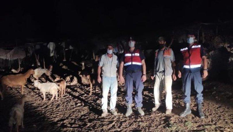 Aydın'da jandarma kaybolan keçileri drone ile buldu