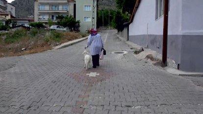 Torunu için aldığı kuzu peşinden ayrılmıyor