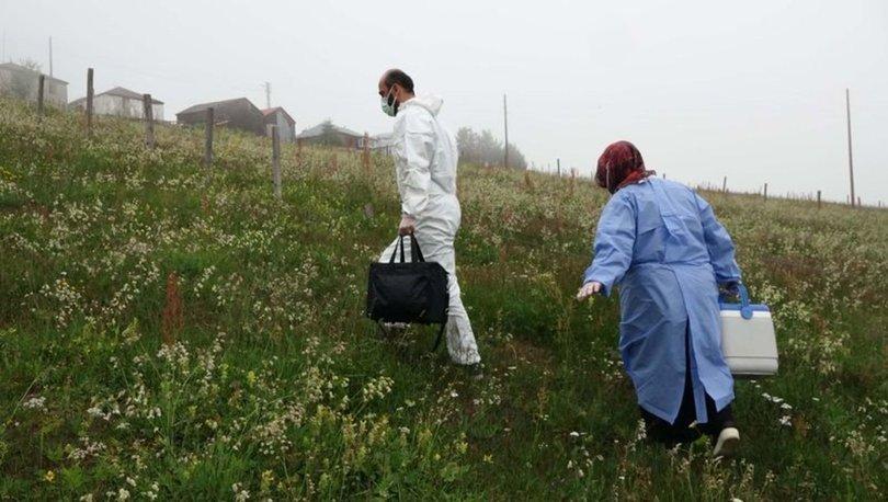 Karadeniz yaylalarında 'aşı' mesaisi - Haberler