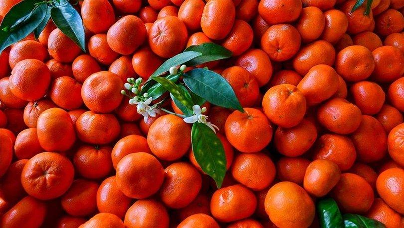 Turunçgil ihracatını yılın ilk yarısında mandalina ve limon sırtladı