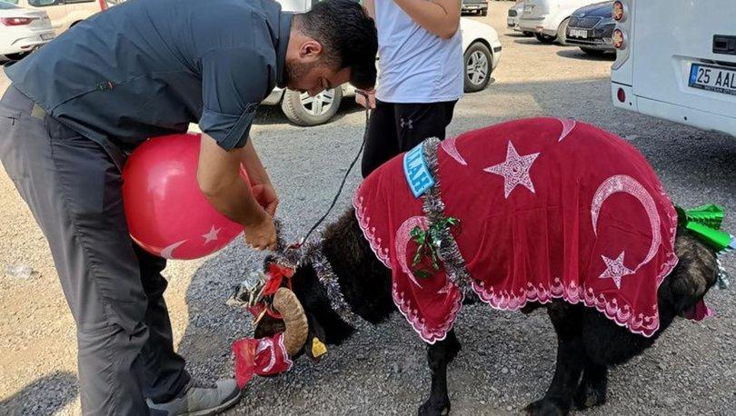 Erzurum'da 'gelin koçu' geleneği devam ediyor