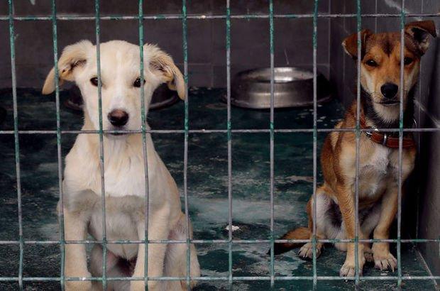 """ABD'den Türkiye'ye """"köpeklerde yüksek kuduz riski"""" kısıtlaması"""