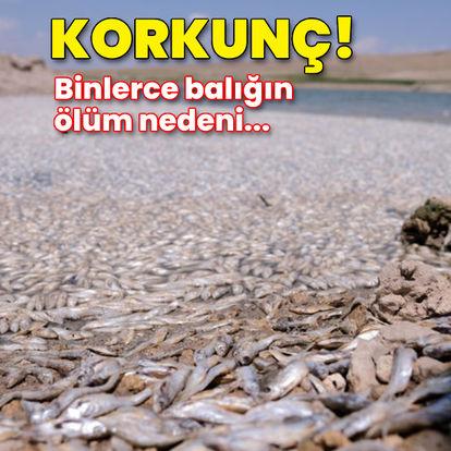 Sular çekildi, balıklar öldü!