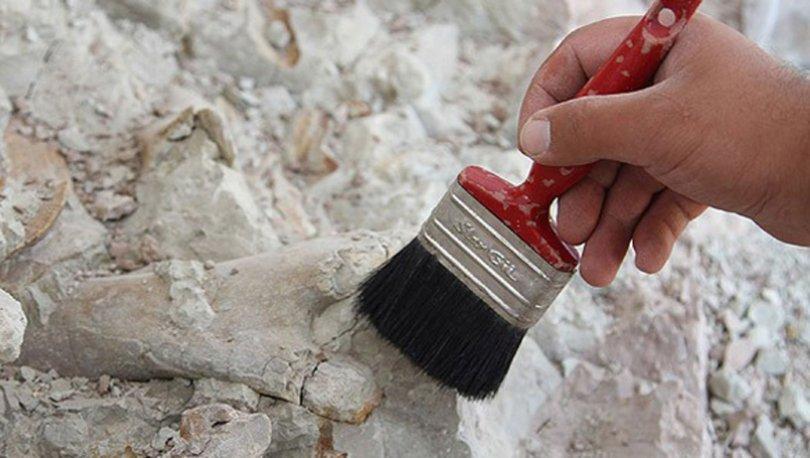 Kanada'da 890 milyon yıllık dünyanın en eski hayvan fosili bulundu