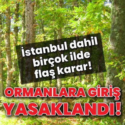 Birçok kentte ormanlara giriş yasaklandı