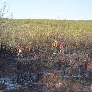 Bilecik'te orman yangını! 1 gözaltı
