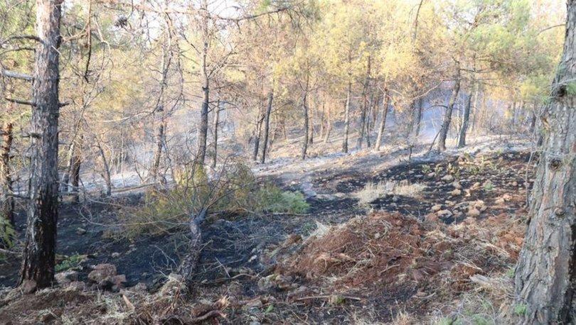Kilis'te ormanlık alanlara girişler 30 Eylüle kadar yasaklandı
