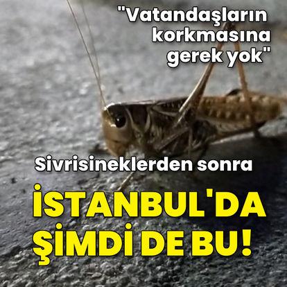 İstanbul'da sivrisinekten sonra şimdi de bu!