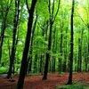 Ormanlara girmek yasaklandı mı?