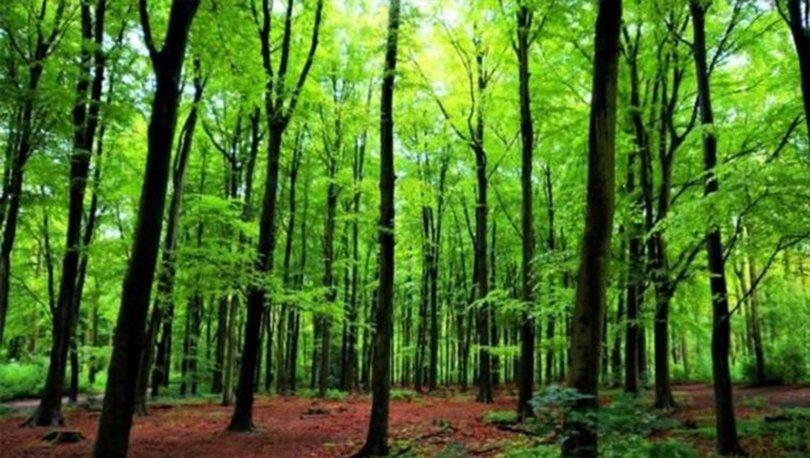 Ormanlara girmek yasaklandı mı? Piknik mangal yapmak yasak mı? İşte orman girişi yasaklanan iller