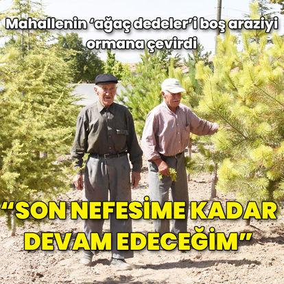 Mahallenin 'ağaç dedeler'i boş araziyi ormana çevirdi...