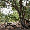 Tunceli'de ormanlık alanlara 30 günlük giriş yasağı