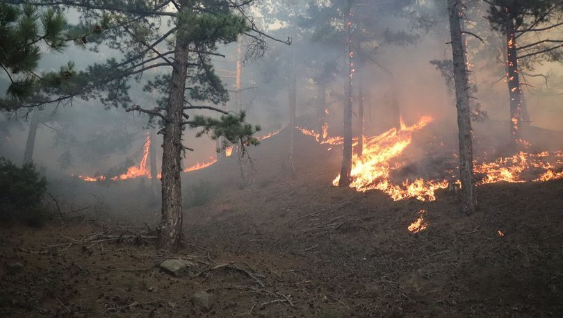 Orman yangınlarıyla kereste fiyatları yükseldi