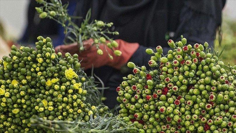 Orman yangınlarının süs bitkileri ihracatına olumsuz etkisinin 5-6 milyon doları bulması bekleniyor
