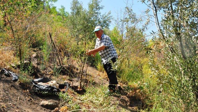 Spil Dağı'na 42 yıldır ağaç dikiyor