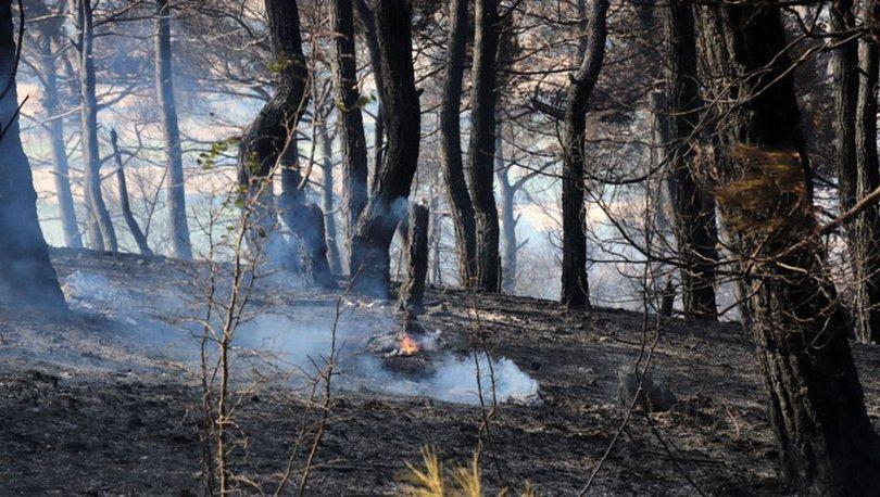 Son dakika! Çanakkale Bayramiç'te orman yangını kontrol altında