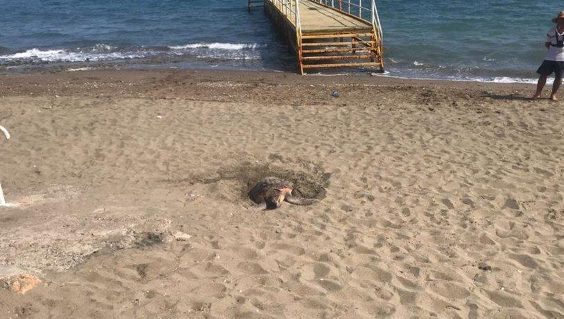 Mersin kumsalı ender görülen bir olaya ev sahipliği yaptı
