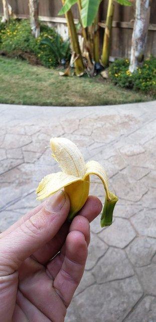 Sebze-meyve yetiştiren amatör çiftçiler hayal kırıklıklarını paylaştı!