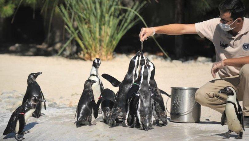 Penguenlerin beslenme saatleri ilgi görüyor
