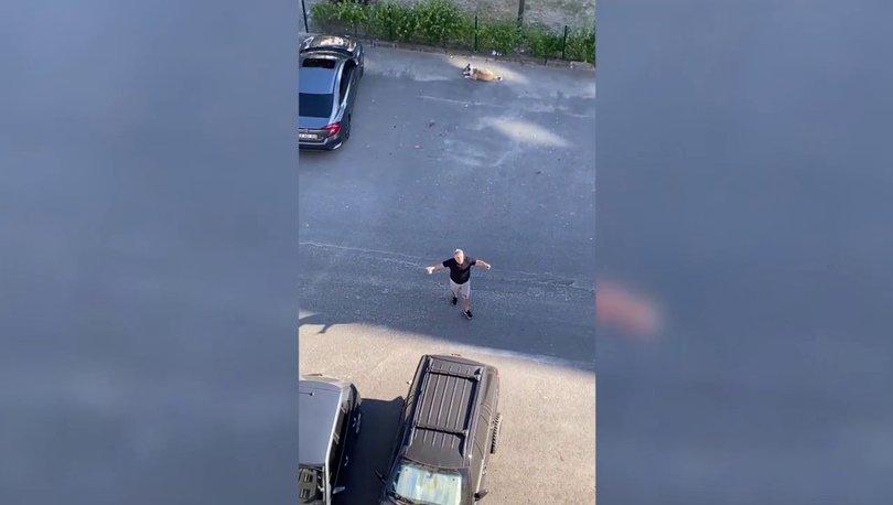 HELAL OLSUN! Son dakika: Herkes sokak köpeğinin hakkını savunan Daire 16 Özay Kaya'yı konuşuyor!