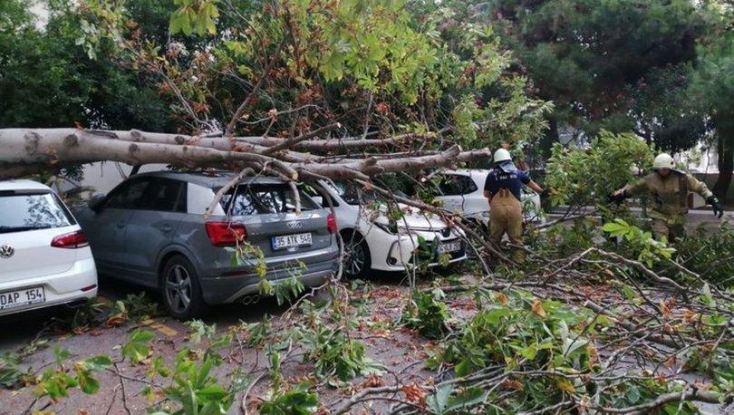 Son dakika: Kadıköy'de ağaç otomobillerin üzerine devrildi