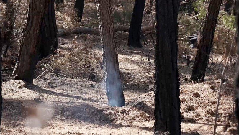 Antalya'da acı görüntü! Hâlâ duman tütüyor - Haberler