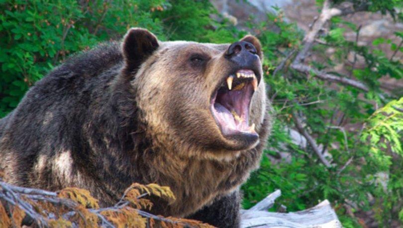 Erzurum'da ava giden kişi, ayı saldırısında ağır yaralandı