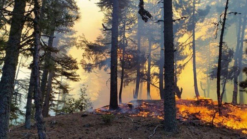 Adana Kozan'da orman yangını - Son dakika haberleri