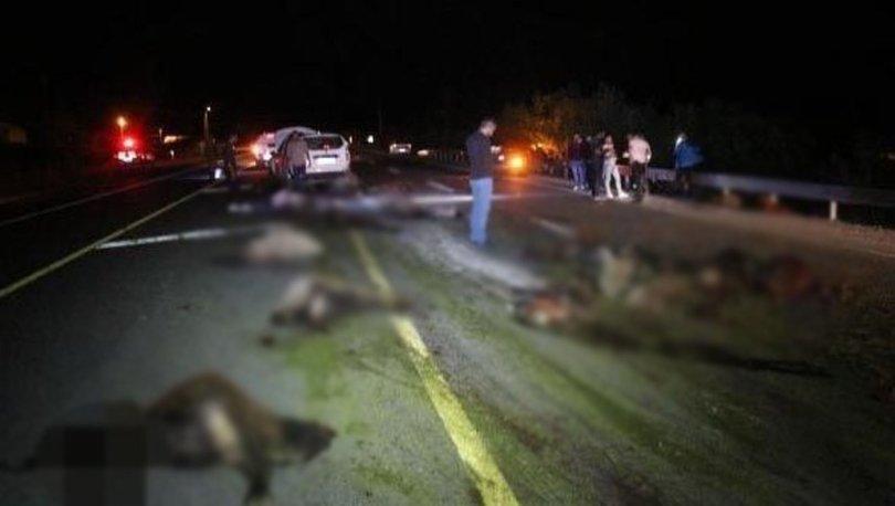Erzurum'da iki otomobil koyun sürüne daldı: 40 koyun öldü
