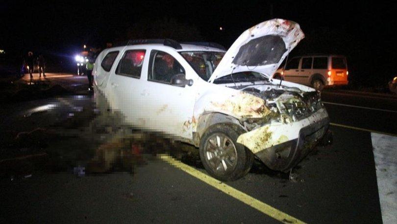 İki otomobil koyun sürüne çarptı: 40 koyun öldü