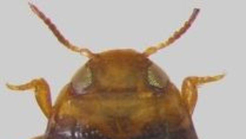 Adıyaman'da yeni bir böcek türü keşfedildi